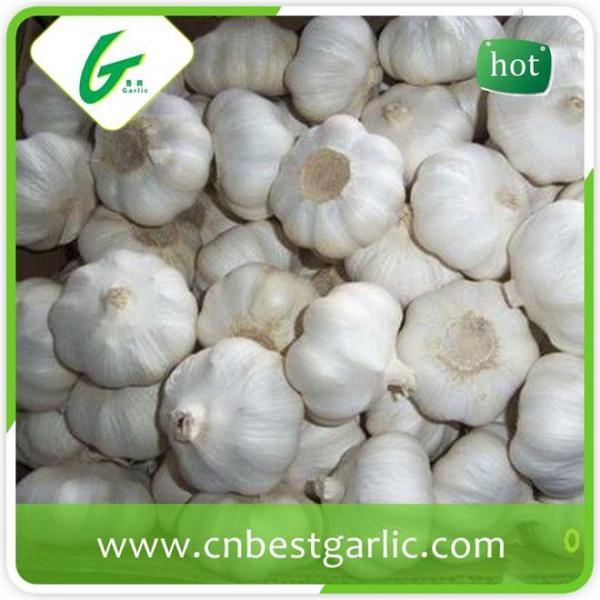 Good taste fresh chinese cheap garlic rates exporter #1 image