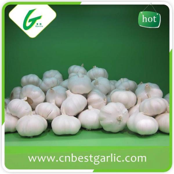 Good taste fresh chinese cheap garlic rates exporter #3 image