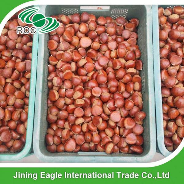 Bulk large nutritous sweet fresh chestnuts with best price #1 image