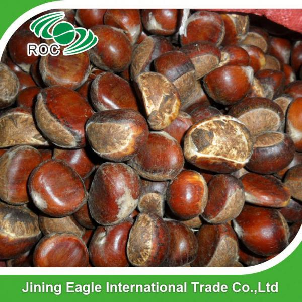 Bulk large nutritous sweet fresh chestnuts with best price #5 image