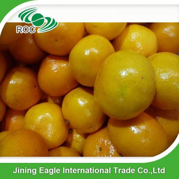 New crop fresh sugar mandarin orange in favorable price #2 image