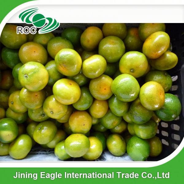 New crop fresh sugar mandarin orange in favorable price #4 image
