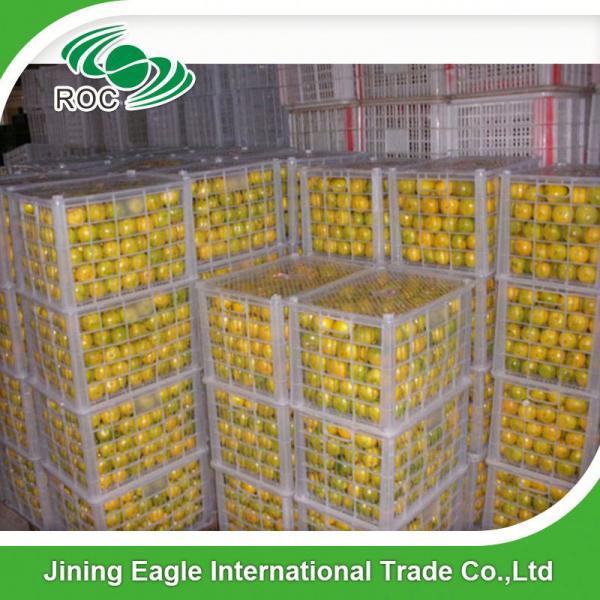 New crop fresh sugar mandarin orange in favorable price #5 image