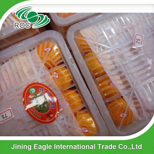 Sweet fresh citrus fruit baby mandarin orange #1 image