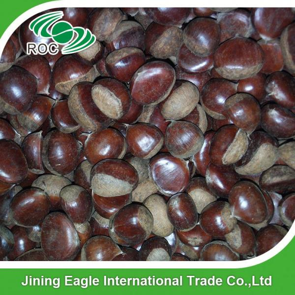 Chinese best pricing fresh raw organic chestnuts #1 image