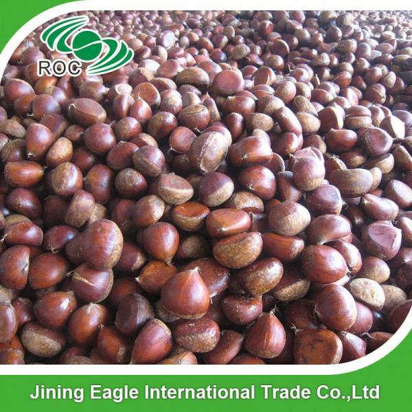 Chinese best pricing fresh raw organic chestnuts #2 image