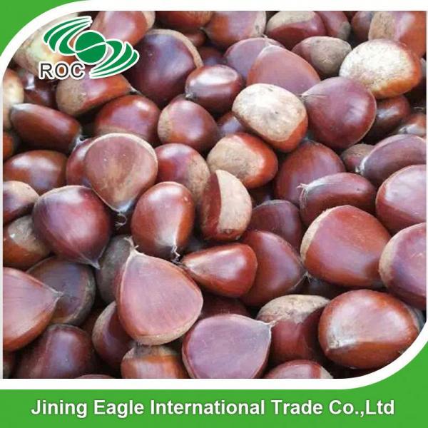 Chinese best pricing fresh raw organic chestnuts #3 image