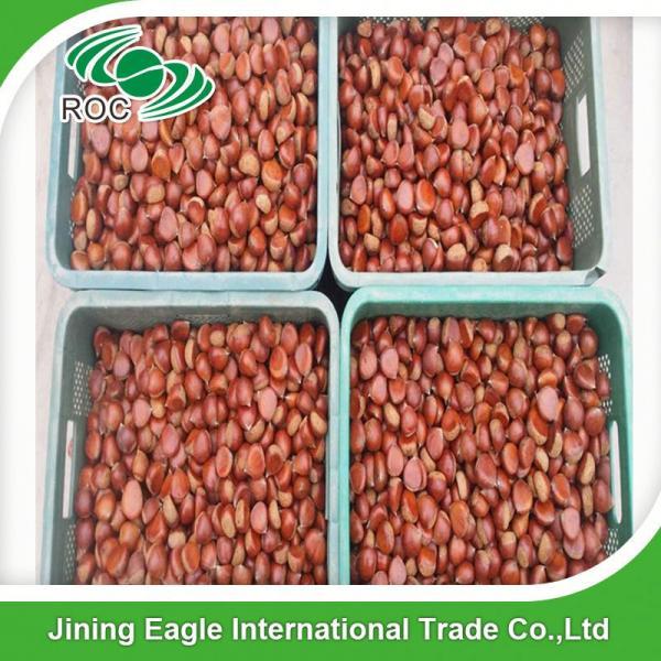 Chinese best pricing fresh raw organic chestnuts #5 image