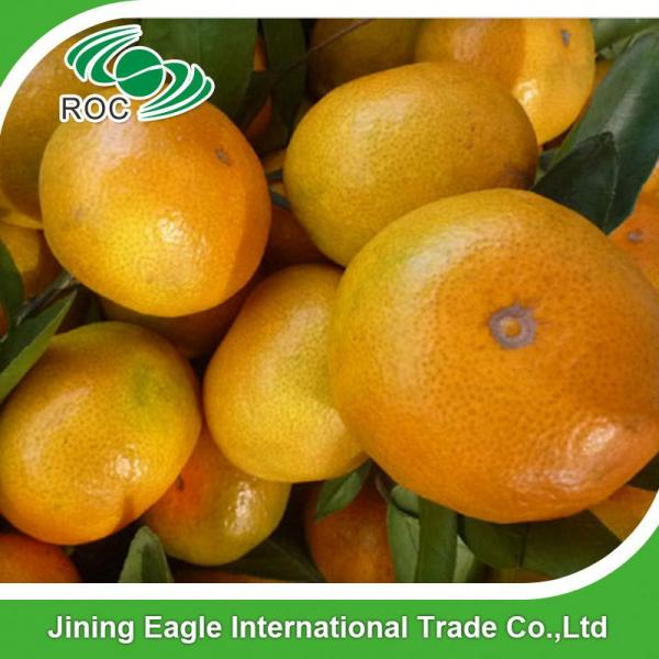 Fresh nanfeng small honey mandarin orange fruit #2 image
