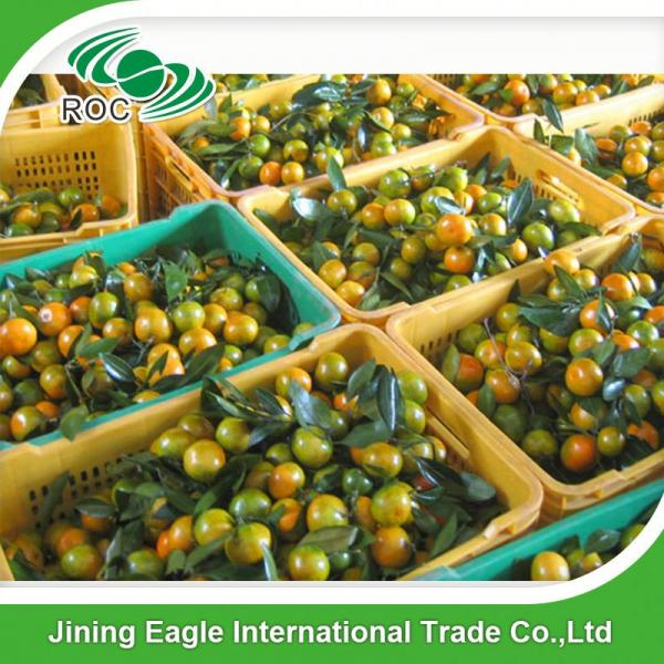 Fresh nanfeng small honey mandarin orange fruit #3 image