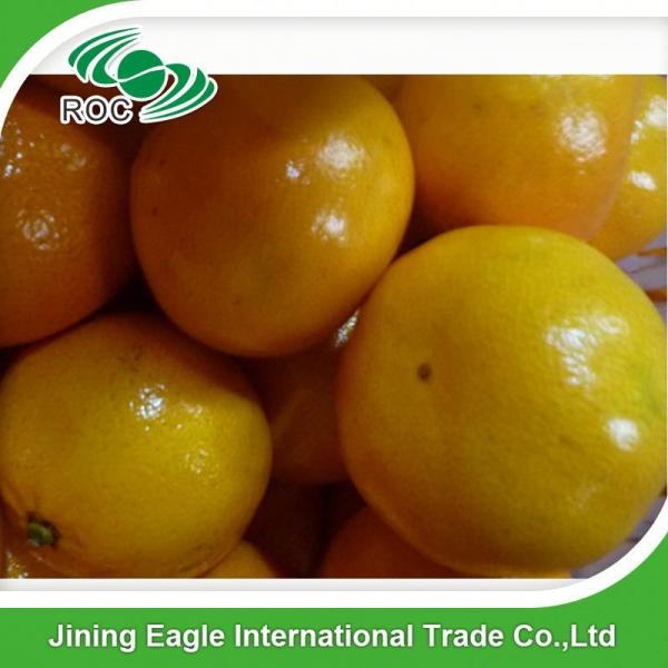 Fresh nanfeng small honey mandarin orange fruit #5 image