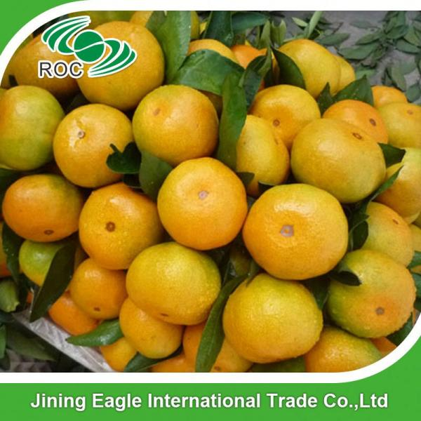 Sweet nanfeng fresh small honey mandarin orange #4 image