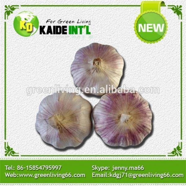 China Super White Garlic Exporter #2 image