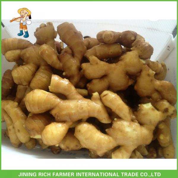 Chinese Fresh Ginger Price Wholesales #1 image