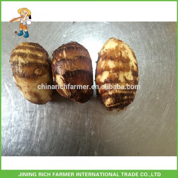 Taro Buyers, Fresh Taro, Dried Taro #1 image