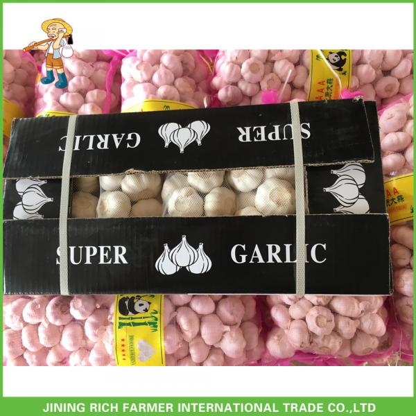 Hot Sale Fresh Normal White Garlic 5.0 cm /5p In 4 Mesh Bag For Jordan #2 image