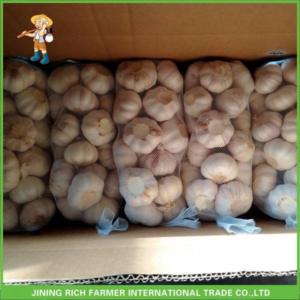 Hot Sale Fresh Normal White Garlic 5.0 cm /5p In 4 Mesh Bag For Jordan #3 image