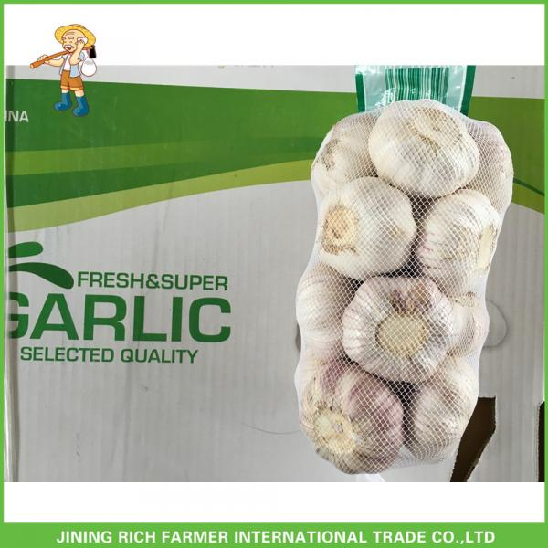 Hot Sale Fresh Normal White Garlic 5.0 cm /5p In 4 Mesh Bag For Jordan #4 image