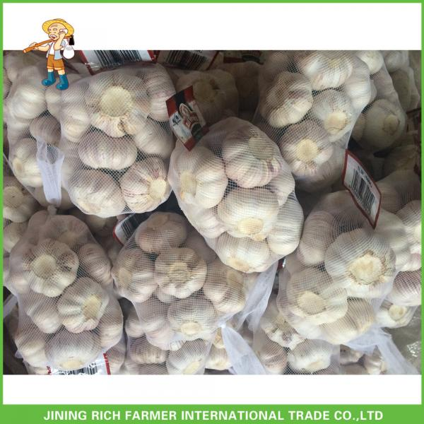 Hot Sale Fresh Normal White Garlic 5.0 cm /5p In 4 Mesh Bag For Jordan #5 image