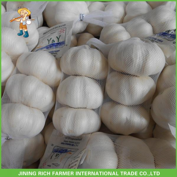 Hot Sale Top Quality New Crop Fresh Pure White Garlic 5.0 cm In 10KG Carton For Tunisia #1 image