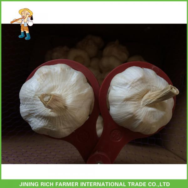 Hot Sale Top Quality New Crop Fresh Pure White Garlic 5.0 cm In 10KG Carton For Tunisia #2 image