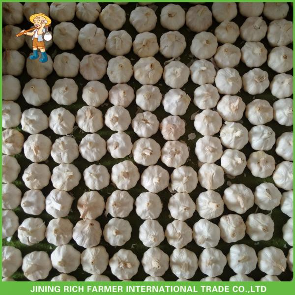 Hot Sale Top Quality New Crop Fresh Pure White Garlic 5.0 cm In 10KG Carton For Tunisia #3 image