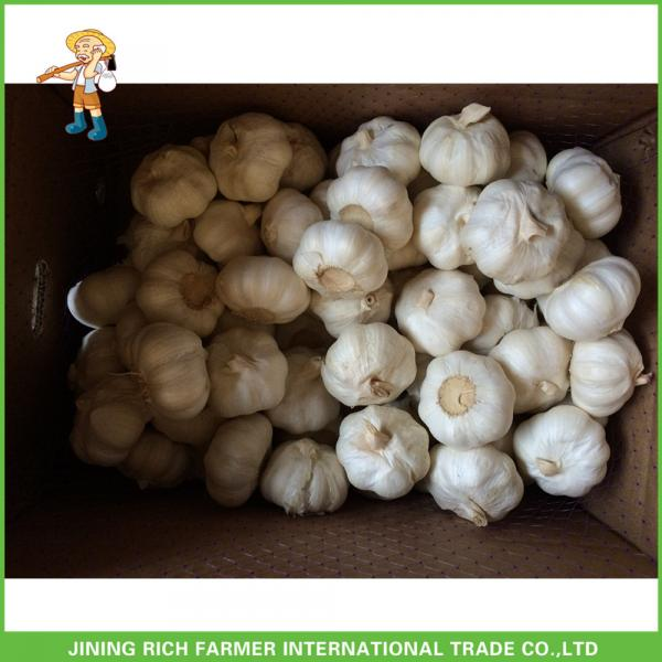 Hot Sale Top Quality New Crop Fresh Pure White Garlic 5.0 cm In 10KG Carton For Tunisia #4 image