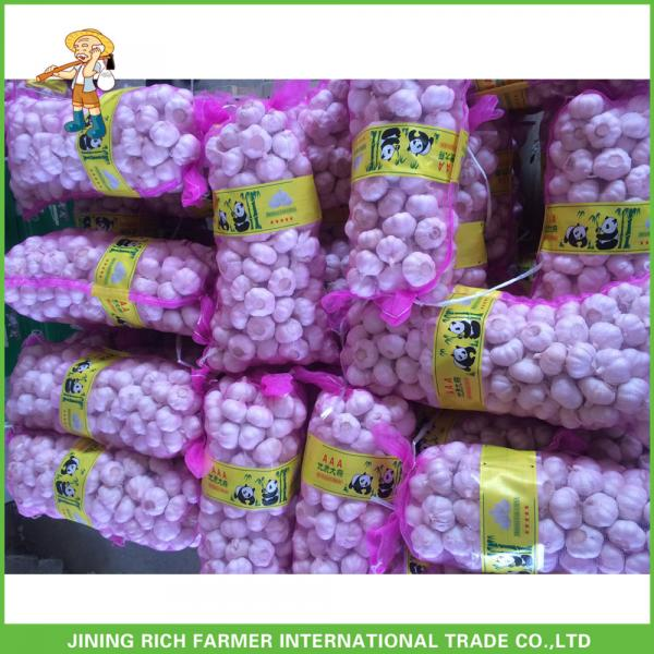 Hot Sale Top Quality New Crop Fresh Pure White Garlic 5.0 cm In 10KG Carton For Tunisia #5 image