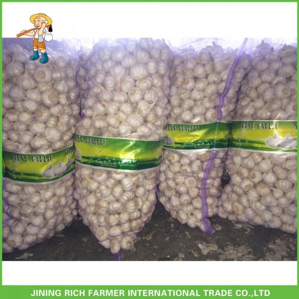 Jinxiang China Fresh White Garlic High Quality Cheapest Price 5.0CM #2 image