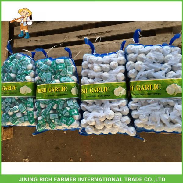 Jinxiang China Fresh White Garlic High Quality Cheapest Price 5.0CM #5 image
