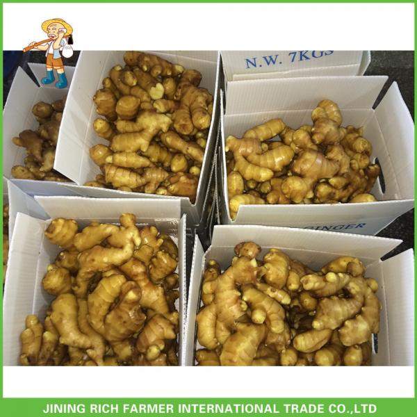Wholesale Export Naturally Dried Fresh Ginger 200g From #1 image
