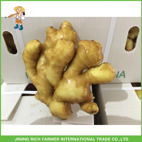 2017 Top Quality Fresh Ginger For Sale #1 image