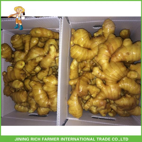 Sale High Quality Chinese Fresh Ginger 150g Up #1 image