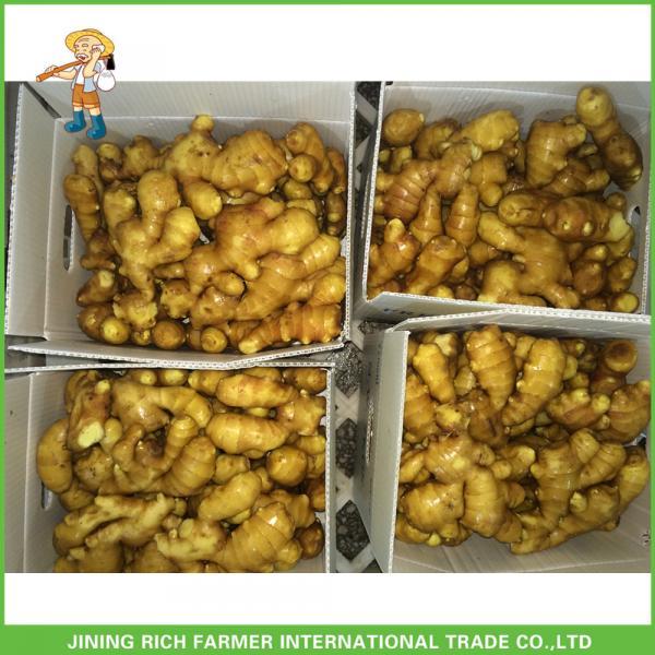 150g Fresh Ginger From Organic Ginger Supplier #1 image