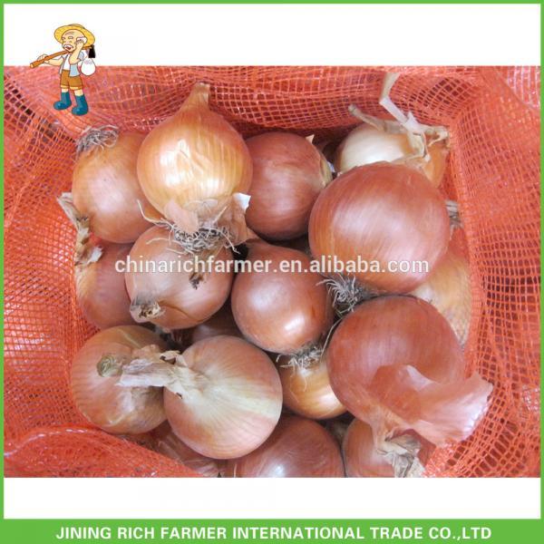 Import Fresh Yellow Onions #1 image