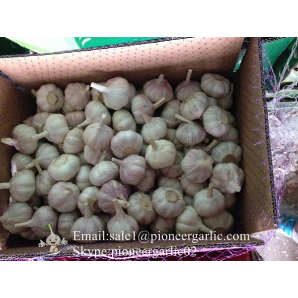 New Crop 6cm and up Purple Fresh Garlic In 10 kg Box packing #1 image