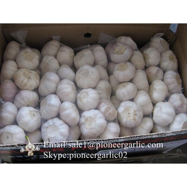Best seller Purple Garlic 5.0cm-5.5cm Packed in Mesh Bag or Carton Box #1 image