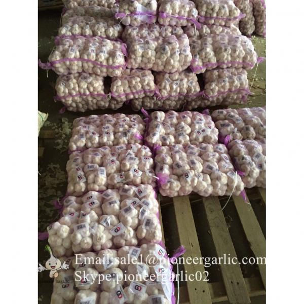 Normal White Purple Garlic with Favorable Price Best Quality #5 image