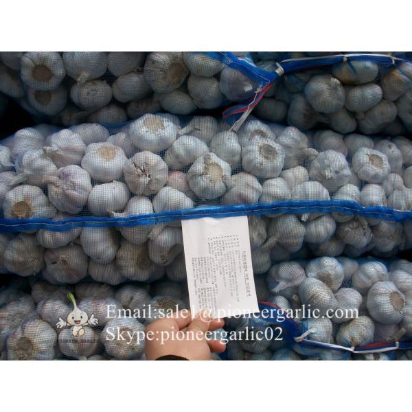 Chinese Fresh Red (Allium Sativum) Garlic Loose Packing #1 image