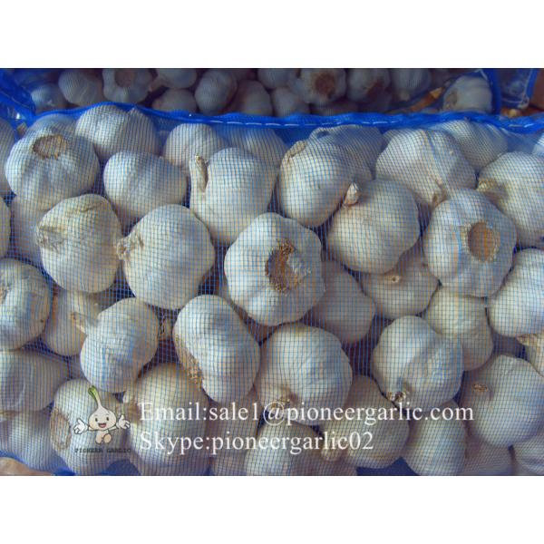 New Crop Fresh Jinxiang Normal White Garlic 5cm And Up In Mesh Bag Packing #3 image
