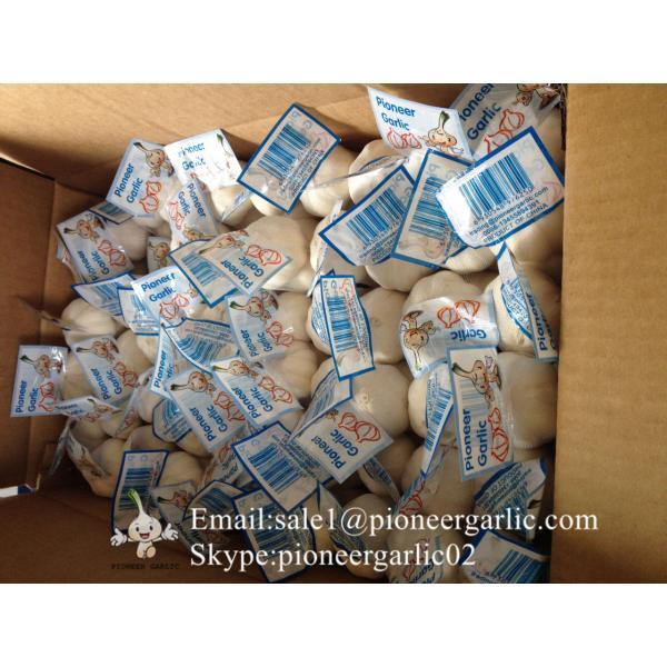 New Crop Chinese 4.5cm Snow White Fresh Garlic Loose Carton Packing #1 image