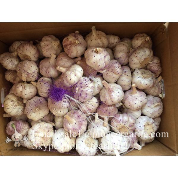 Chinese Fresh Red (Allium Sativum) Garlic Loose Packing #3 image