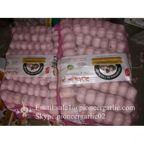 Best seller Normal White Garlic 5.0cm-5.5cm Packed in Mesh Bag or Carton Box #5 image