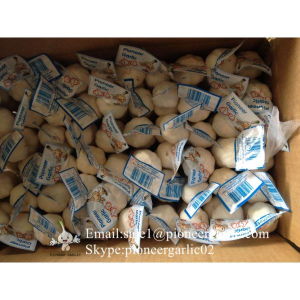 Chinese Fresh Jinxiang Snow White 5.5cm Garlic Small Packing In 10kg Box #3 image