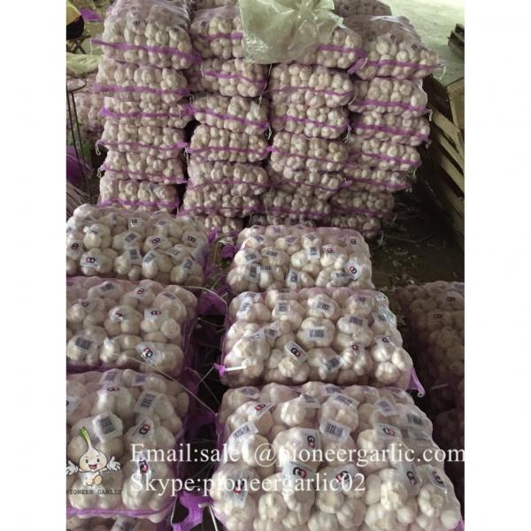 New Crop Fresh Jinxiang Normal White Garlic 5cm And Up In Mesh Bag Packing #1 image