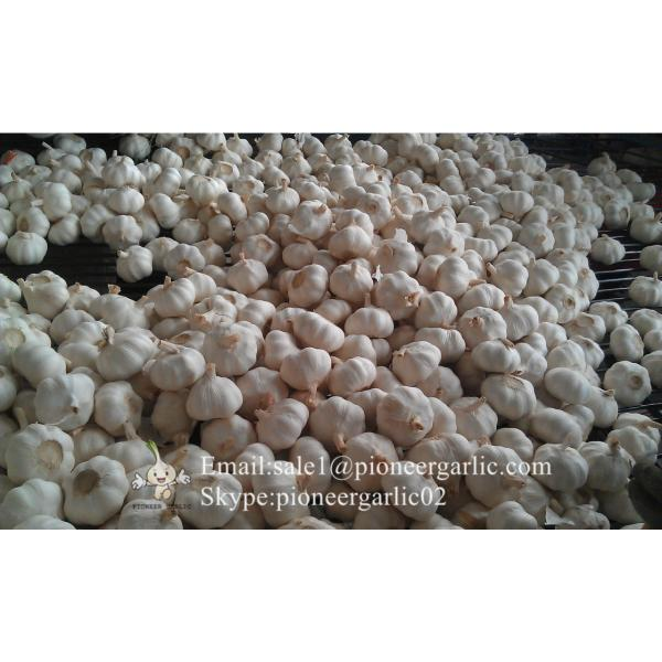 Normal White Purple Garlic with Favorable Price Best Quality #4 image