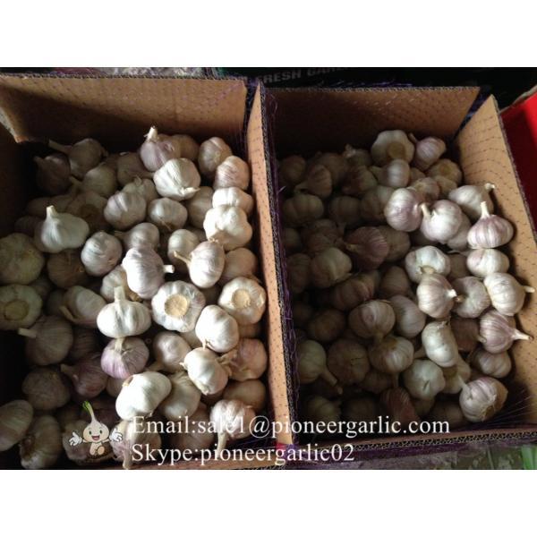Chinese Fresh Red Garlic (Allium Sativum) Packed In Mesh Bag #3 image