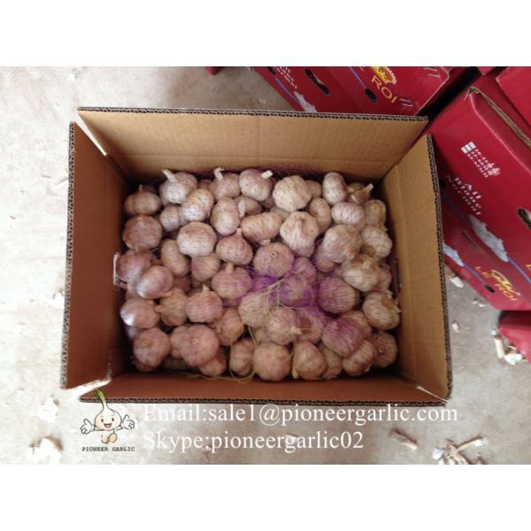 Chinese Fresh Red Garlic (Allium Sativum) Packed In Mesh Bag #5 image