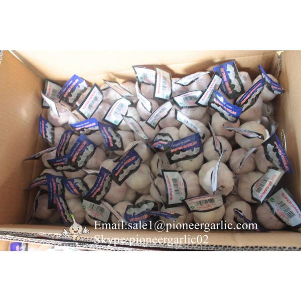 New Crop Chinese 4.5cm Snow White Fresh Garlic Loose Carton Packing #3 image