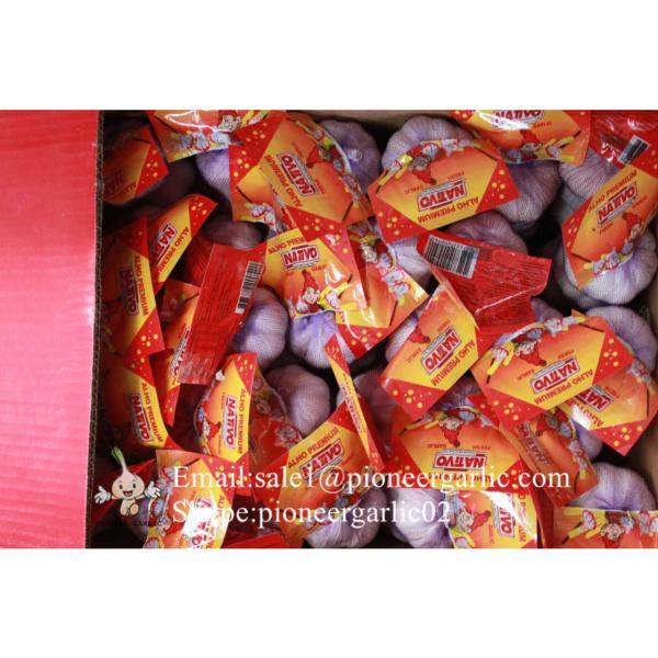 New Crop Chinese 4.5cm Snow White Fresh Garlic Loose Carton Packing #5 image